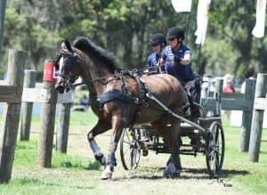 Tracey Morgan and Fuego 88 at the 2017 Live Oak International where they won the USEF Single Pony Combined Driving National Championship. Photo: Picsofyou.com